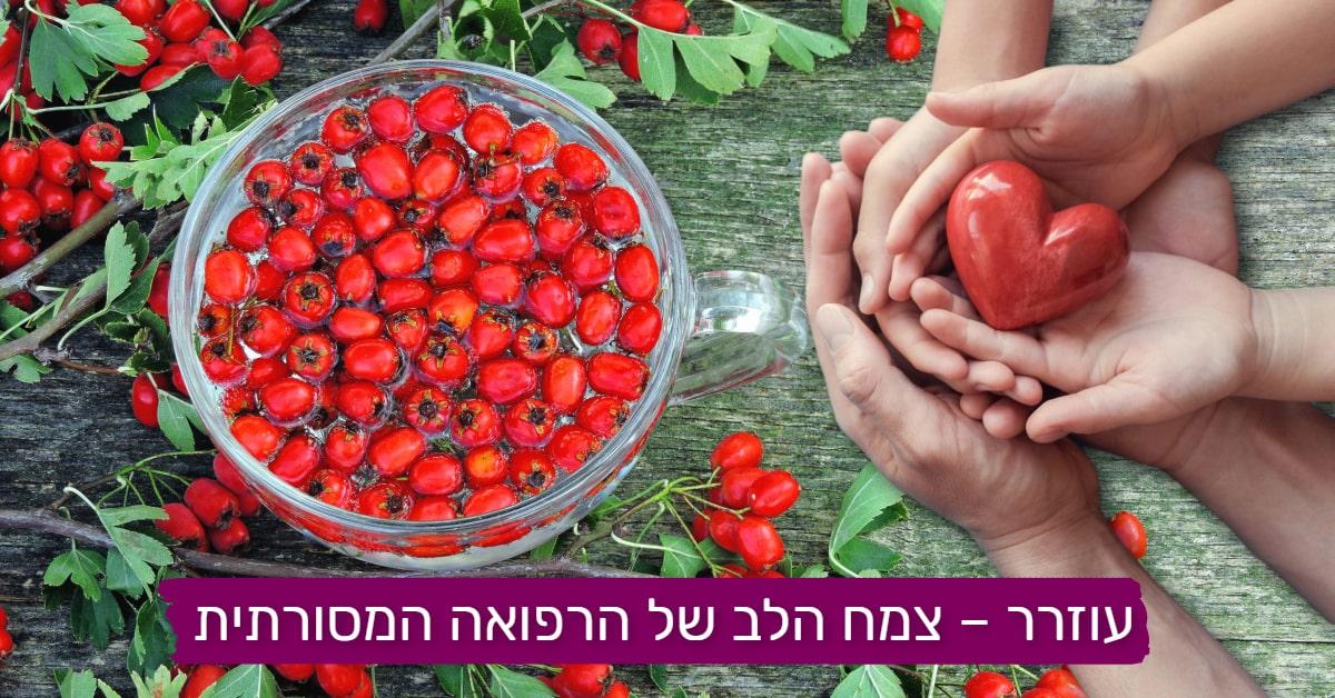 עורר - צמח הלב של הרפואה המסותרתית